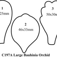 Bauhinia Orchid Large set of 3 C197A